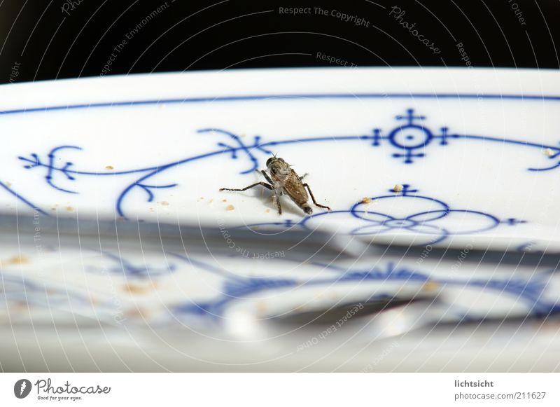 Bremse auf Friesenteller Geschirr Teller Ornament weiß blau-weiß schwarz rund Krümel Friesenmuster Porzellan Insekt Muster Menschenleer Farbfoto Nahaufnahme
