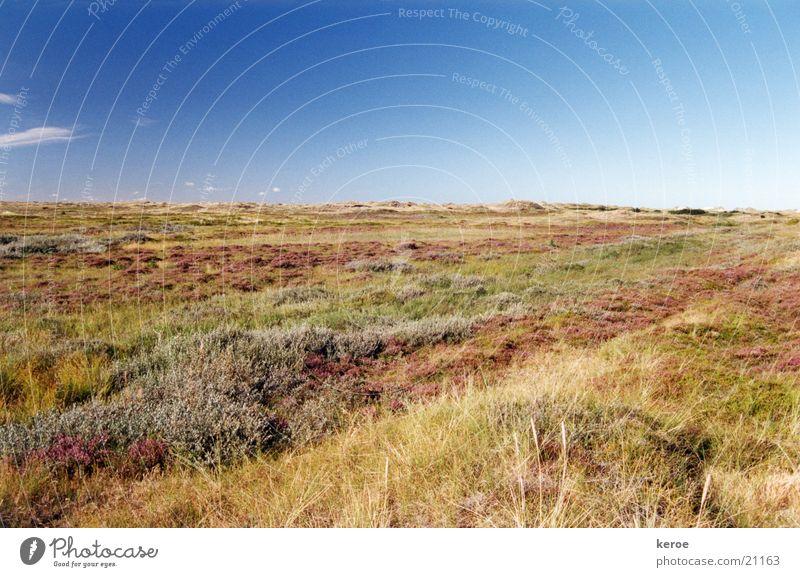 Prärie Sommer Blauer Himmel Dänemark Heide