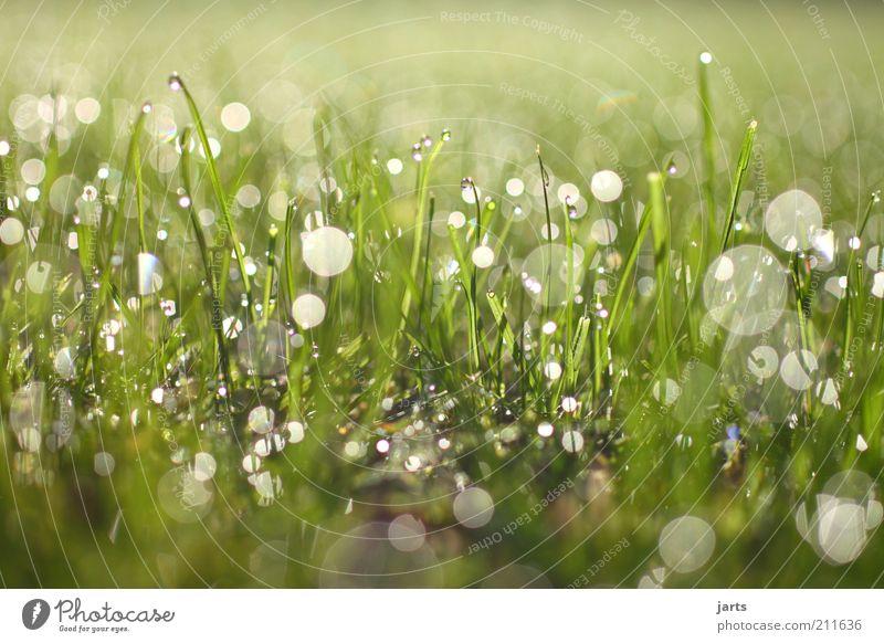 shine on Natur schön grün Pflanze Wiese Gras Kraft Wassertropfen frisch fantastisch natürlich Schönes Wetter Sonnenstrahlen nachhaltig Textfreiraum Blendenfleck