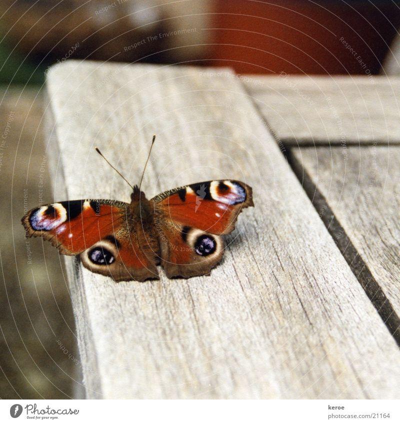 Landebahn Schmetterling Tagpfauenauge Holz Flügel