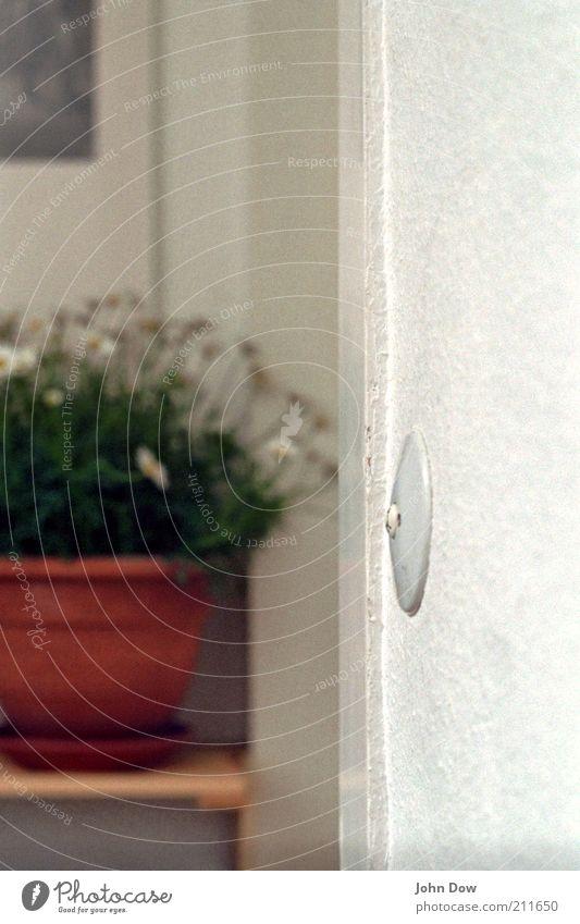 Klingel putzen Blume Wohnung Tür retro Dekoration & Verzierung Häusliches Leben Blühend Eingang Flur Klingel Schalter Margerite Blumentopf Topfpflanze Türrahmen Eingangstür