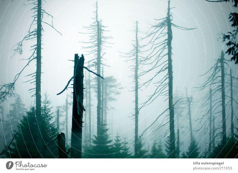 milchwald Umwelt Natur Herbst schlechtes Wetter Nebel Baum Wald dunkel gruselig kalt natürlich blau Stimmung Einsamkeit Endzeitstimmung Vergänglichkeit