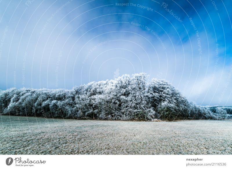 Winderlandschaft Ausflug Freiheit Umwelt Natur Landschaft Himmel Winter Schönes Wetter Eis Frost Baum atmen beobachten Bewegung Erholung frieren