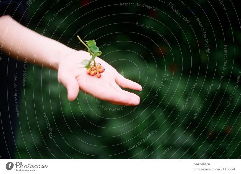 Beeren in der Hand Finger Natur Pflanze Sommer Blatt Beerensträucher Sträucher Garten Park Wald wählen natürlich Leben Kontakt Farbfoto Außenaufnahme