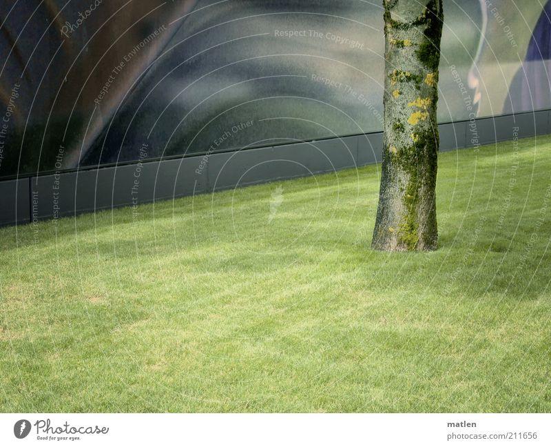 Stammbaum Baum grün Sommer ruhig Wand Gras grau Stein Mauer Baumstamm Bildausschnitt Reinheit Weitwinkel Grünfläche