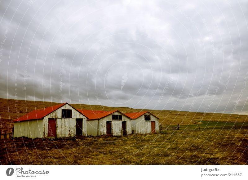 Island Umwelt Natur Landschaft Himmel Wolken Klima Wiese Haus Hütte Gebäude bedrohlich dunkel einzigartig natürlich Stimmung Häusliches Leben Stall Scheune