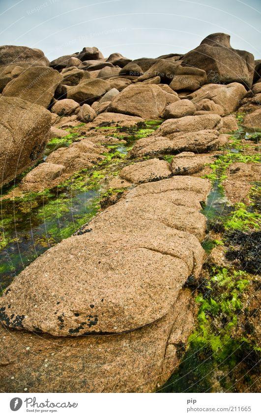 rocher Natur Urelemente Wasser Seegras Algen Felsen Küste Riff Stein braun grün Biotop Formation steinig Geröll fest Bretagne Granit Ebbe Gezeiten Farbfoto