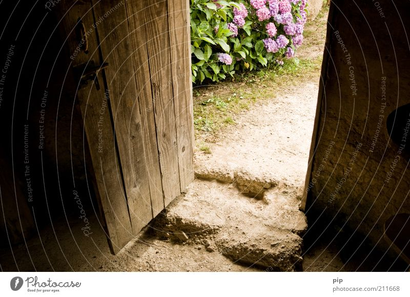 mind the gap Natur alt Blume ruhig Holz Stein Zufriedenheit braun Tür offen Sträucher einfach violett Häusliches Leben Hütte Eingang
