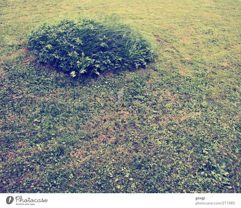 Insel Natur grün Pflanze Sommer Gras Garten Erde Kreis Rasen rund weich außergewöhnlich Rest Gartenbau
