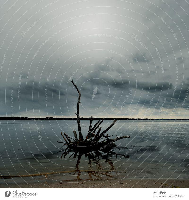 loch ness Umwelt Natur Landschaft Sand Luft Wasser Himmel Wolken Horizont Klima Klimawandel Wetter schlechtes Wetter Küste Strand Ostsee Wurzel entwurzelt