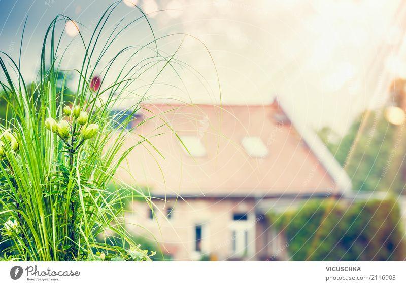 Schöne grüne Pflanze und Blumen auf Dachterrasse Lifestyle Stil Design Sommer Häusliches Leben Wohnung Garten Natur Sonnenlicht Frühling Herbst Schönes Wetter