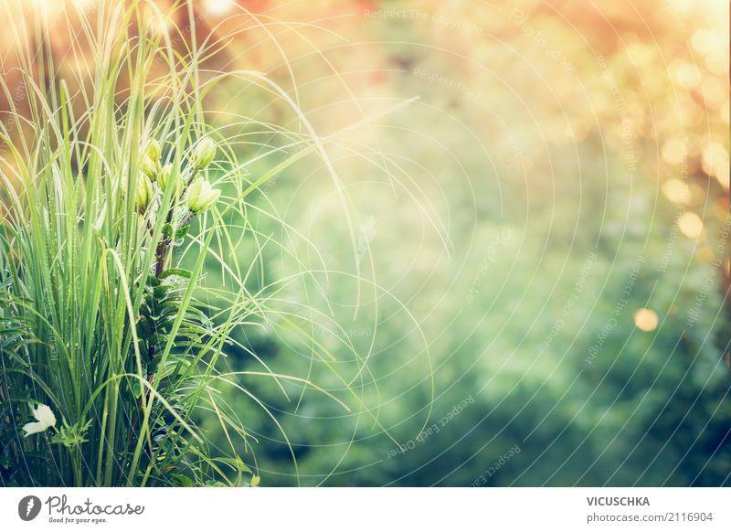 Sommer Natur Hintergrund Lifestyle Design Garten Pflanze Frühling Blume Gras Park Hintergrundbild grün Sonnenlicht Farbfoto Außenaufnahme Textfreiraum Mitte