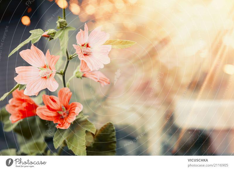 Hübsche Sommer Blumen Natur Pflanze schön rot gelb Lifestyle Herbst Stil Garten Design Park Schönes Wetter Malvengewächse