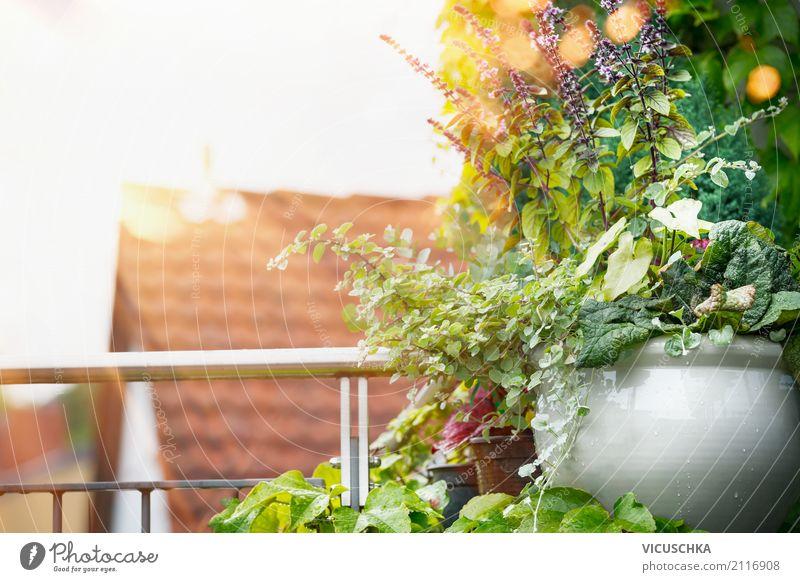 Topfblumen auf Balkon oder Terrasse Lifestyle Design Ferien & Urlaub & Reisen Sommer Häusliches Leben Wohnung Garten Natur Sonnenaufgang Sonnenuntergang