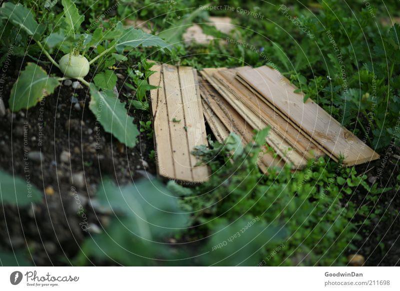 Konzeptgarten Lebensmittel Gemüse Ernährung Umwelt Natur Erde Frühling Pflanze Garten Wachstum Stimmung Kohlrabi Holzbrett Ernte Farbfoto Außenaufnahme