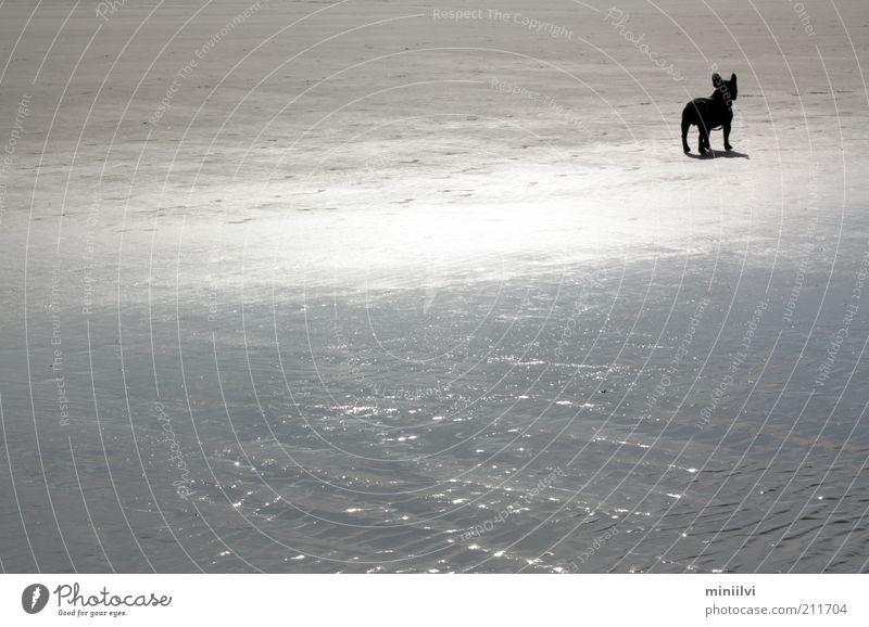 Bully sucht Frau Ausflug Sommer Strand Meer Sand Wasser Sonnenlicht Haustier Hund 1 Tier stehen warten frei glänzend ruhig Neugier Sehnsucht Stimmung