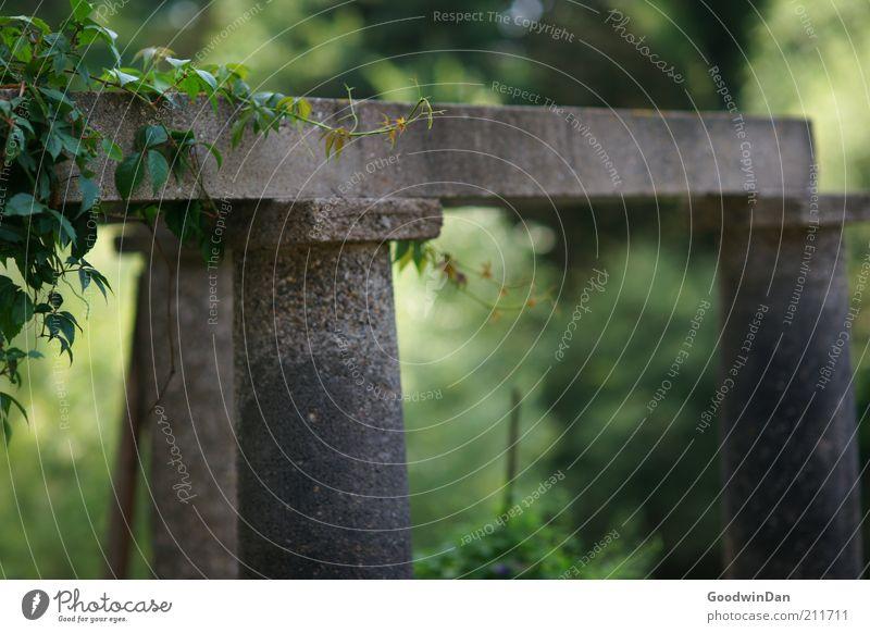 lieber auf die Terrasse Natur Pflanze Gefühle Garten Stein Wärme Stimmung klein Umwelt Beton Wachstum atmen Säule Vorfreude Efeu