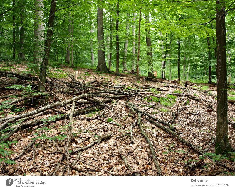 Mikado XXL Natur grün Baum Pflanze Sommer Ferien & Urlaub & Reisen Blatt ruhig Wald Freiheit Landschaft Umwelt Holz braun Zufriedenheit Ausflug