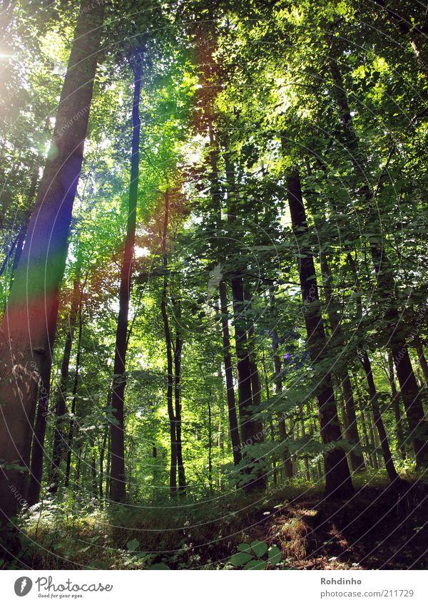Waldregenbogen Natur Baum grün Pflanze Sommer Blatt Holz Landschaft Umwelt hoch Klima Ast Baumstamm Baumkrone Regenbogen