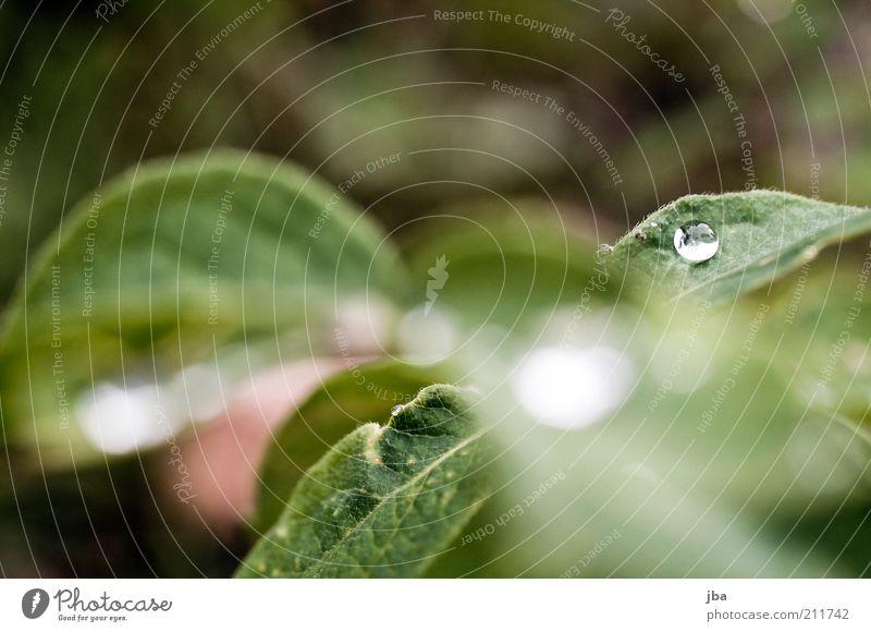 Tautropf Natur Wasser grün Pflanze Sommer Blatt Gras träumen Gesundheit Nebel nass Wassertropfen frisch Europa ästhetisch rund
