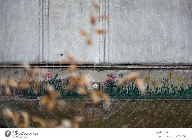 Frühling im Herbst Blume ruhig Einsamkeit Leben Wand träumen Traurigkeit Mauer Architektur Design Zeit Fassade Lifestyle Hoffnung