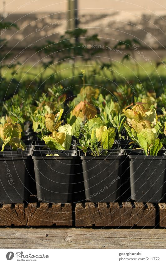 Wachsvolk harmonisch Wohlgefühl Sommer Haus Garten Hausbau einrichten Umwelt Natur Pflanze Frühling Baum Blatt Menschenleer Mauer Wand Terrasse neu saftig braun