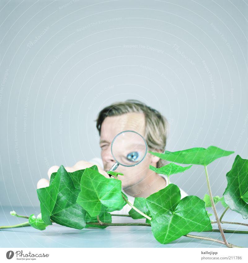 efeu - hedera helix Mensch Mann Natur blau Pflanze Blatt Auge Leben Erwachsene lernen maskulin Studium außergewöhnlich Bildung Student Wissenschaften