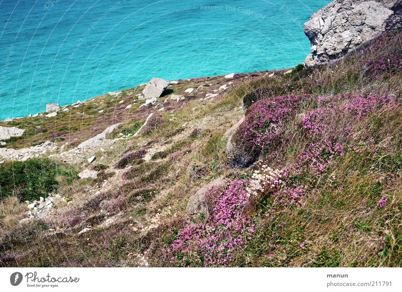 Bretagne IX, Abhang Umwelt Natur Landschaft Erde Wasser Sommer Pflanze Sträucher Moos Blüte Wildpflanze Ginsterblüte Felsen Bucht Riff Meer steinig Einsamkeit