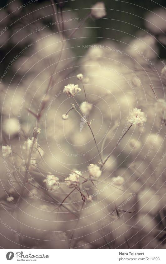 Wattebällchen Natur schön weiß Blume Pflanze Sommer Blüte Bewegung Frühling Glück träumen Park Umwelt ästhetisch Wachstum Sträucher