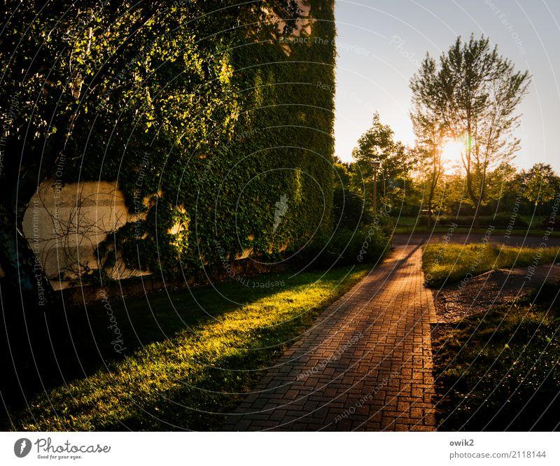 Durch die Zweige Pflanze Baum Landschaft Haus Wand Gras Gebäude Mauer Deutschland Fassade leuchten Wachstum Hochhaus Sträucher Bürgersteig Kleinstadt
