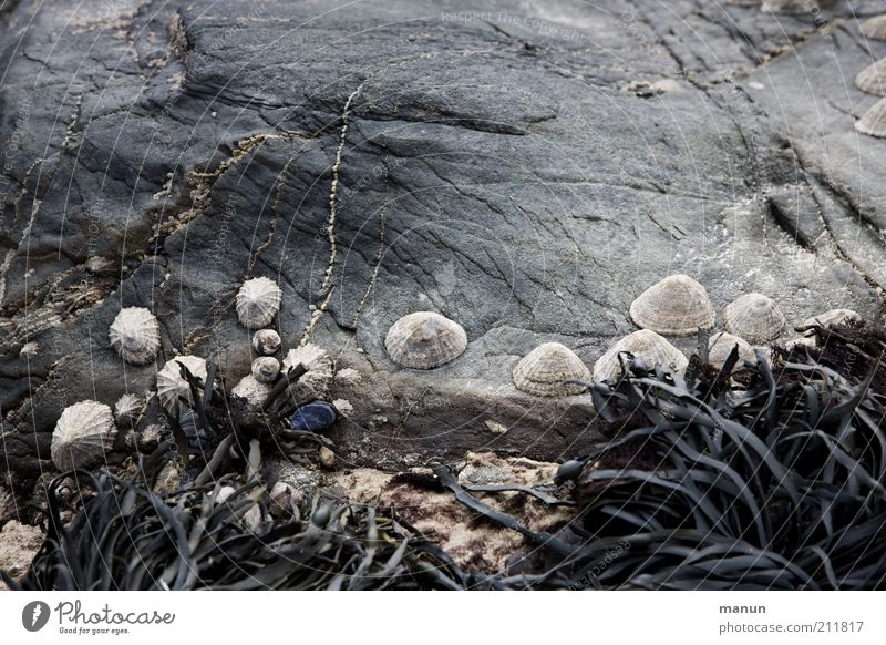 Pocken Natur Pflanze Sommer Strand Ferien & Urlaub & Reisen Küste Umwelt Felsen Tiergruppe Muschel Schnecke Umweltschutz Algen Überleben Riff Ebbe