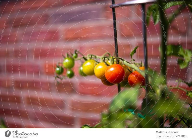Ampel grün rot gelb Wand Garten Gesundheit Frucht Fassade Wachstum Ernährung ästhetisch Backstein Gemüse Kräuter & Gewürze lecker reif
