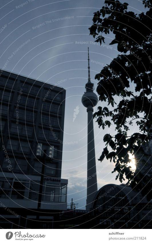 geschafft, Liebling! Hauptstadt Stadtzentrum Haus Turm Bauwerk Gebäude dunkel hoch schwarz Alexanderplatz Fernsehturm Berlin Berliner Fernsehturm Baum