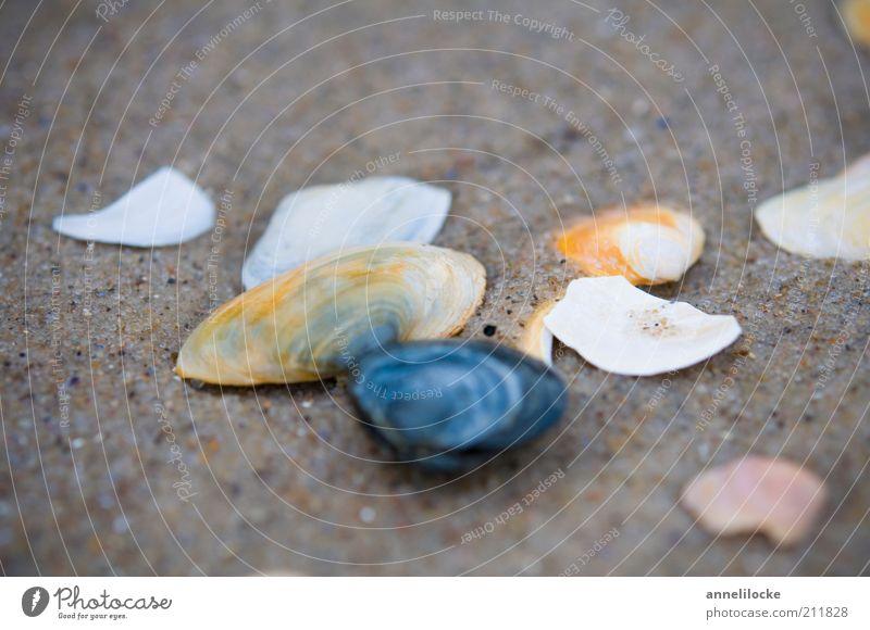 Ein trüber Tag Ferien & Urlaub & Reisen Ausflug Sommerurlaub Strand Umwelt Natur Sand Küste Muschel Muschelschale kaputt Sammlung Suche kalt Farbfoto