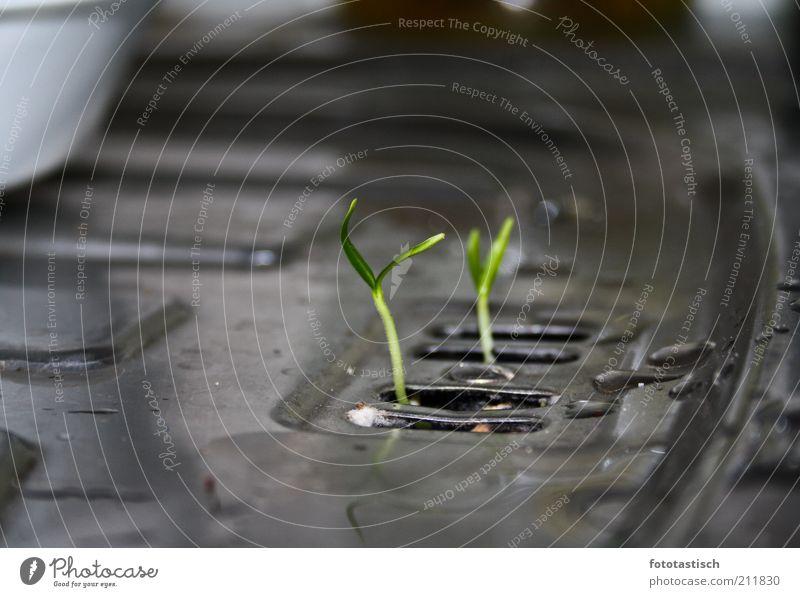 Sink Biotope Natur Wasser Wohnung nass Wachstum Küche zart Stahl Abfluss nachhaltig Küchenspüle Umwelt Detailaufnahme Jungpflanze