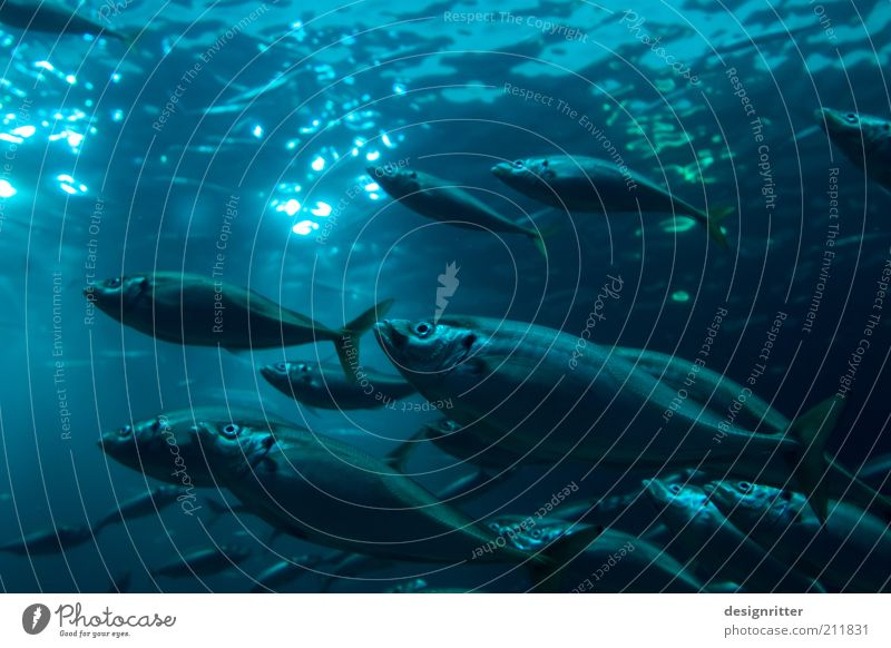 Dagegen Wasser Meer ruhig Leben dunkel Fisch Aktion Klima Sauberkeit Gelassenheit Ostsee Nordsee Tier Umweltschutz Vorsicht