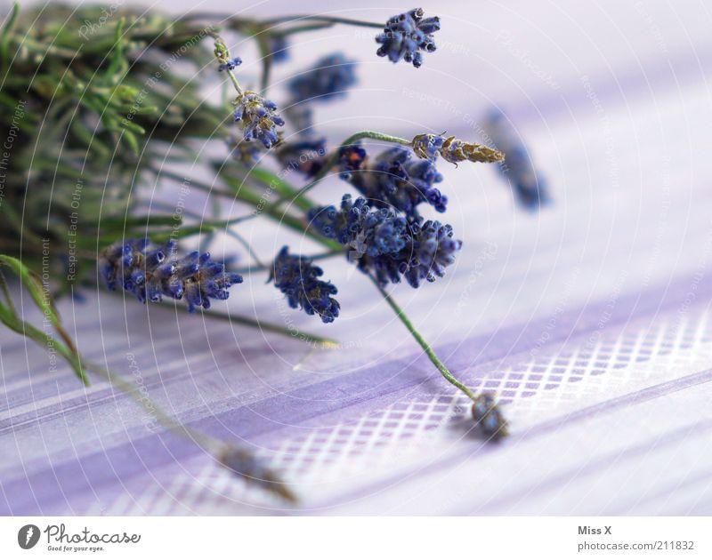 Lavendel Lebensmittel Kräuter & Gewürze Pflanze Sträucher Blüte Nutzpflanze Wildpflanze Topfpflanze dehydrieren Duft trocken violett Farbe Provence Potpourri