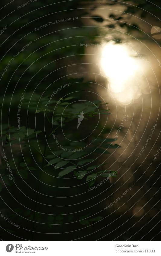 Magie am Fluss Natur Pflanze Gras Frühling Wärme Stimmung Umwelt nass Wachstum Fluss Menschenleer viele Schönes Wetter schimmern Licht