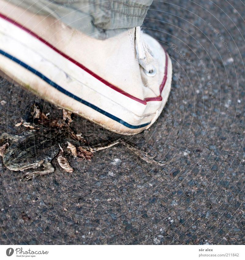 attention weiß Tier Straße Tod grau Wege & Pfade Schuhe gehen laufen Asphalt Wildtier machen Kontrolle Frosch Ekel Chucks