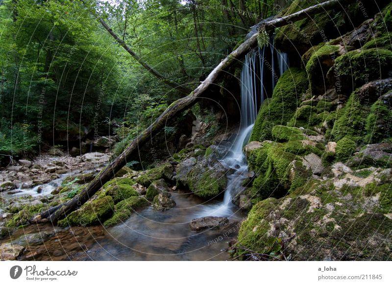 nature 6.6 Natur Urelemente Wasser Sommer Pflanze Baum Wald Felsen Alpen Berge u. Gebirge Bach Wasserfall Wachstum ästhetisch Flüssigkeit natürlich grün
