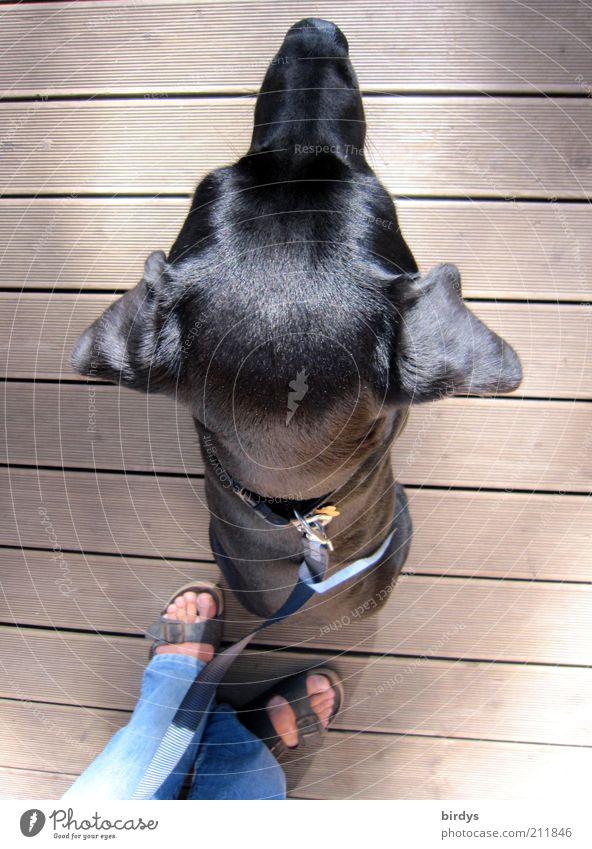 sitzbeifuß Mensch Hund Tier schwarz Fuß glänzend sitzen Seil ästhetisch Ohr Fell Schutz Vertrauen Wachsamkeit Partnerschaft Haustier