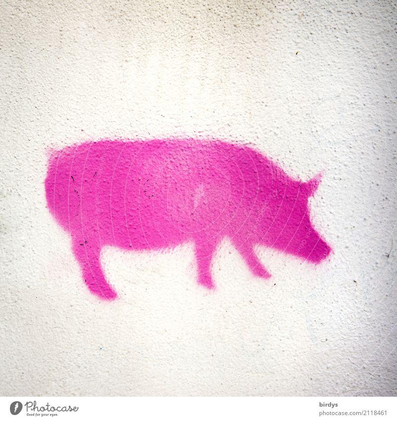 Piggy Pink weiß Tier Graffiti lustig Gesundheit Glück außergewöhnlich rosa Ernährung Freundlichkeit Sauberkeit Landwirtschaft Übergewicht Medikament