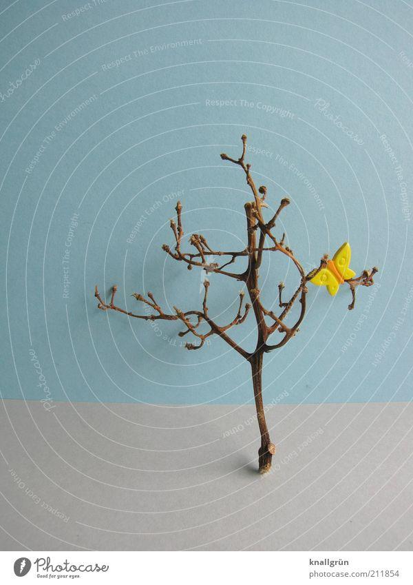 Hoffnung Pflanze Baum Schmetterling kaputt blau braun gelb grau Natur Geäst verdorrt vertrocknet Plastikschmetterling Farbfoto Studioaufnahme Menschenleer