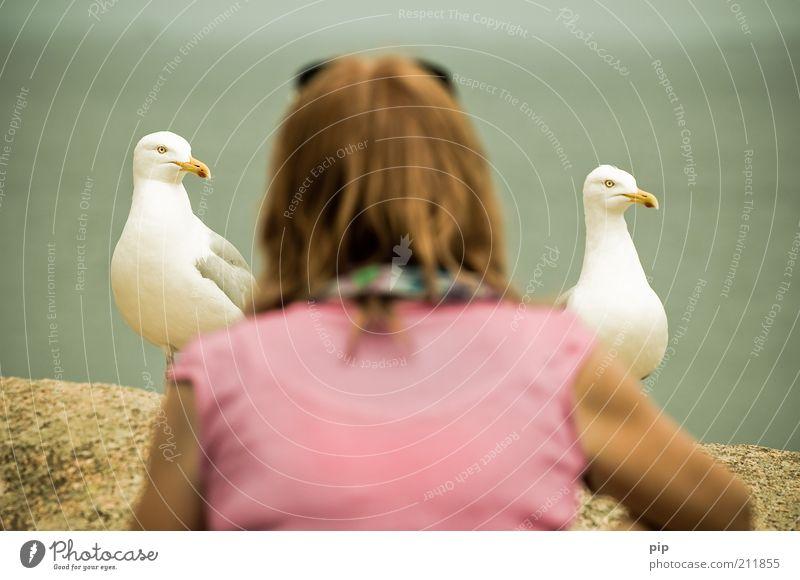 meins, meins Frau Mensch Tier Kopf 2 Zusammensein Vogel Tierpaar lustig Erwachsene rosa Rücken Hoffnung nah beobachten Neugier