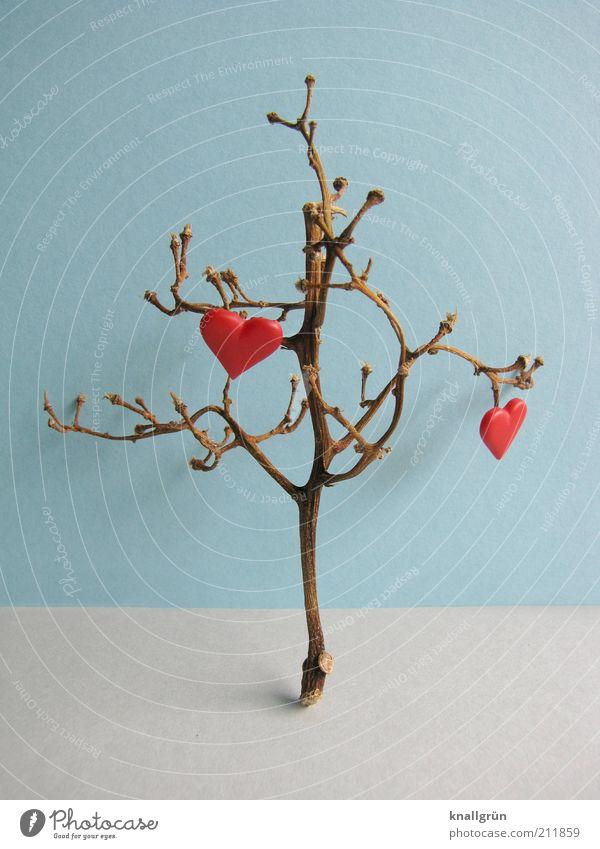 Hoffnungsträger Umwelt Pflanze Baum Herz blau braun grau rot Liebe herzlich Geäst Farbfoto Studioaufnahme Menschenleer Textfreiraum links Textfreiraum rechts