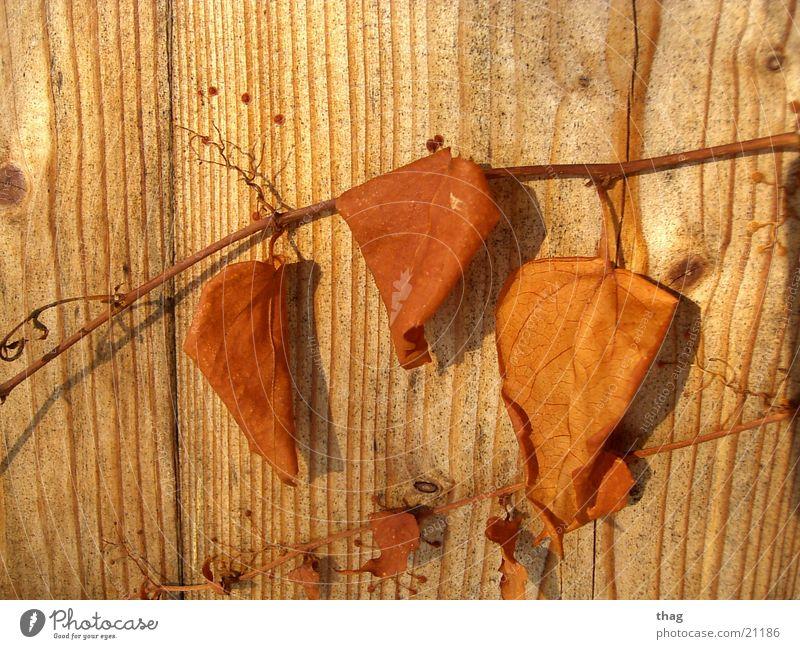 überlebende Winter Blatt Herbst Holz