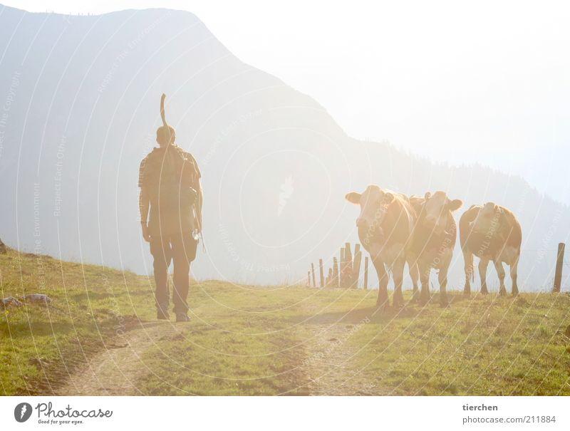 """""""Ja mei, fesch is der Alminger!"""" Mensch Himmel Natur Mann Ferien & Urlaub & Reisen Sommer Sonne Tier ruhig Erwachsene Erholung Berge u. Gebirge Gras Wege & Pfade Freiheit gehen"""