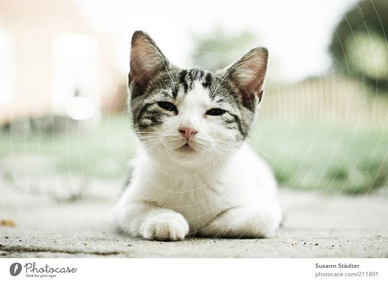 Zeit für Frühstück! Tier Haustier Wildtier Katze Tierjunges beobachten Pause aufwachen Katzenbaby schön niedlich klein Froschperspektive Blick Außenaufnahme