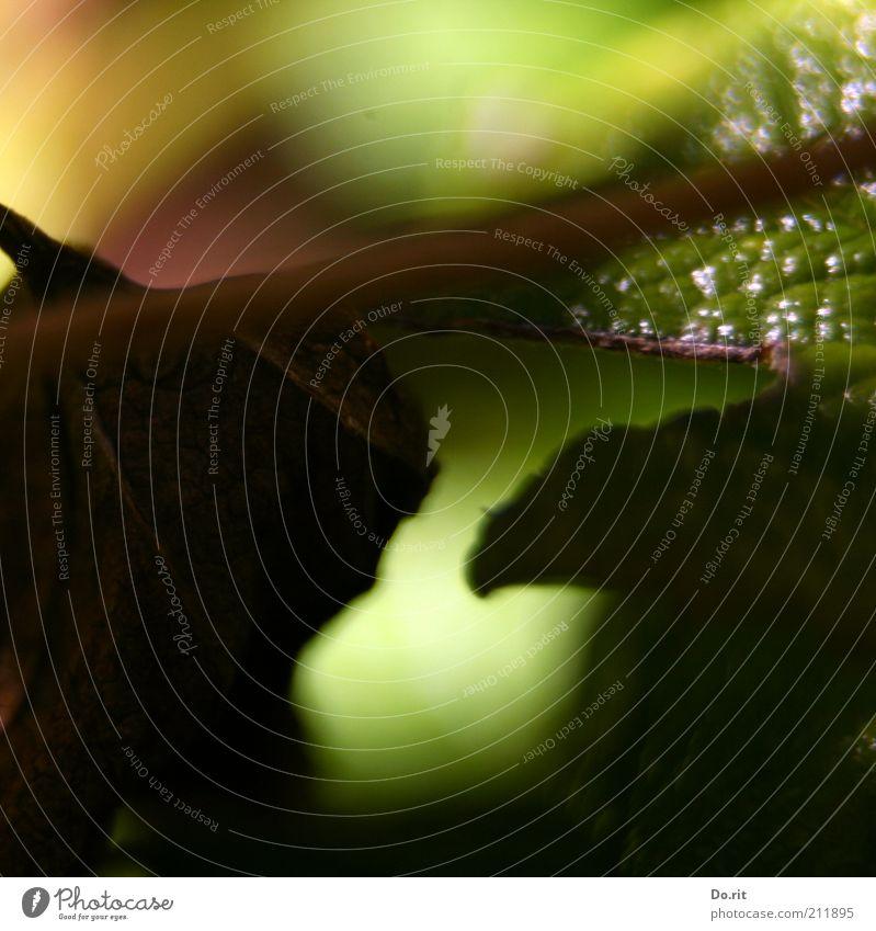 Ende-August-Stimmung Natur alt Pflanze grün Sommer Erholung Blatt Traurigkeit Herbst hell Wachstum trist warten Blühend Vergänglichkeit Schönes Wetter