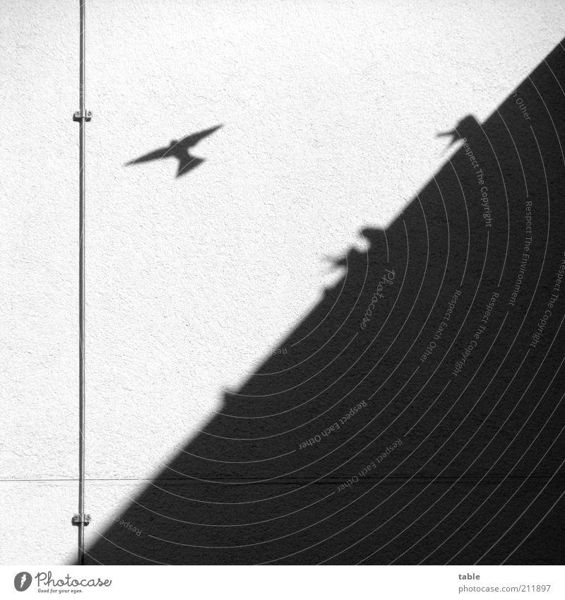 Abflug . . . weiß schwarz Tier Wand Gefühle Bewegung Mauer Zusammensein Vogel warten fliegen hoch Fassade sitzen ästhetisch Tiergruppe